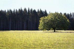 land management services north carolina