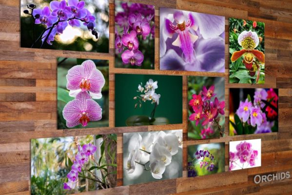 Orchids on glass
