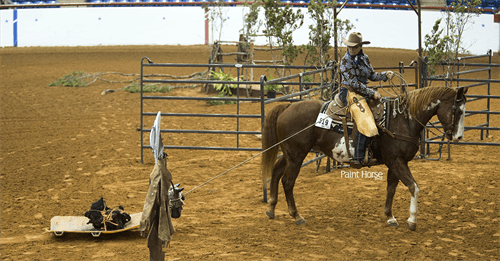 APHA shows get ranchy with launch of new classes | APHA