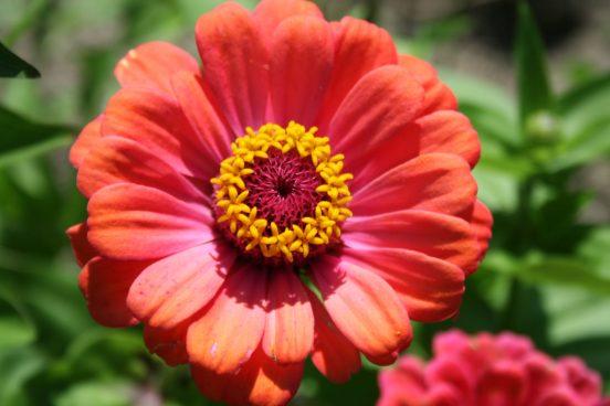 My Grandmother's favorite flower...