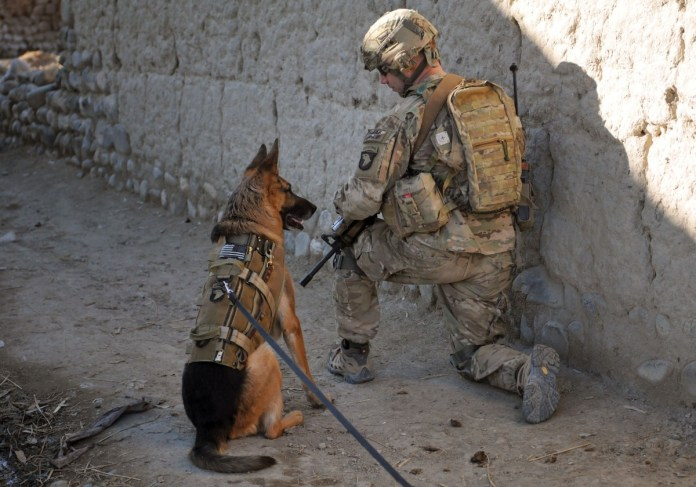 A Soldier and a U.S. Air Force working dog conduct patrols with the Afghan Border Police in Afghanistan in January 2013, in search of locals suspected of creating improvised explosive devices. While the Air Force provides the services with standardiz...