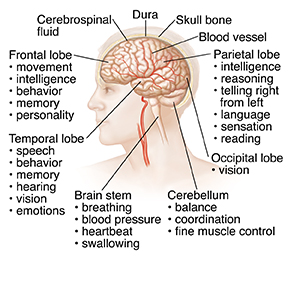 left side brain functions diagram fluorescent light electronic ballast wiring anatomy of the view head and