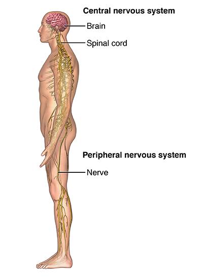 nerves in neck and shoulder diagram set up croquet court pinched nerve university hospitals anerv 20140304 v0 002