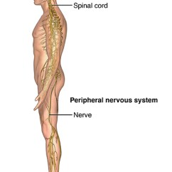 Best Chair After Neck Surgery Exercise Ball As Desk Size Spinal Cord Compression Johns Hopkins Medicine Health Library Can Occur Anywhere From Your Cervical Spine Down To Lower Back Lumbar Symptoms Include Numbness Pain
