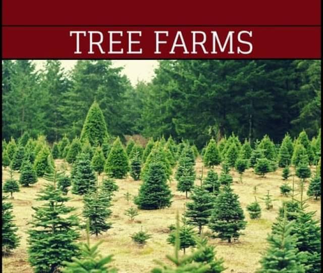 Macgregors Christmas Tree Farm