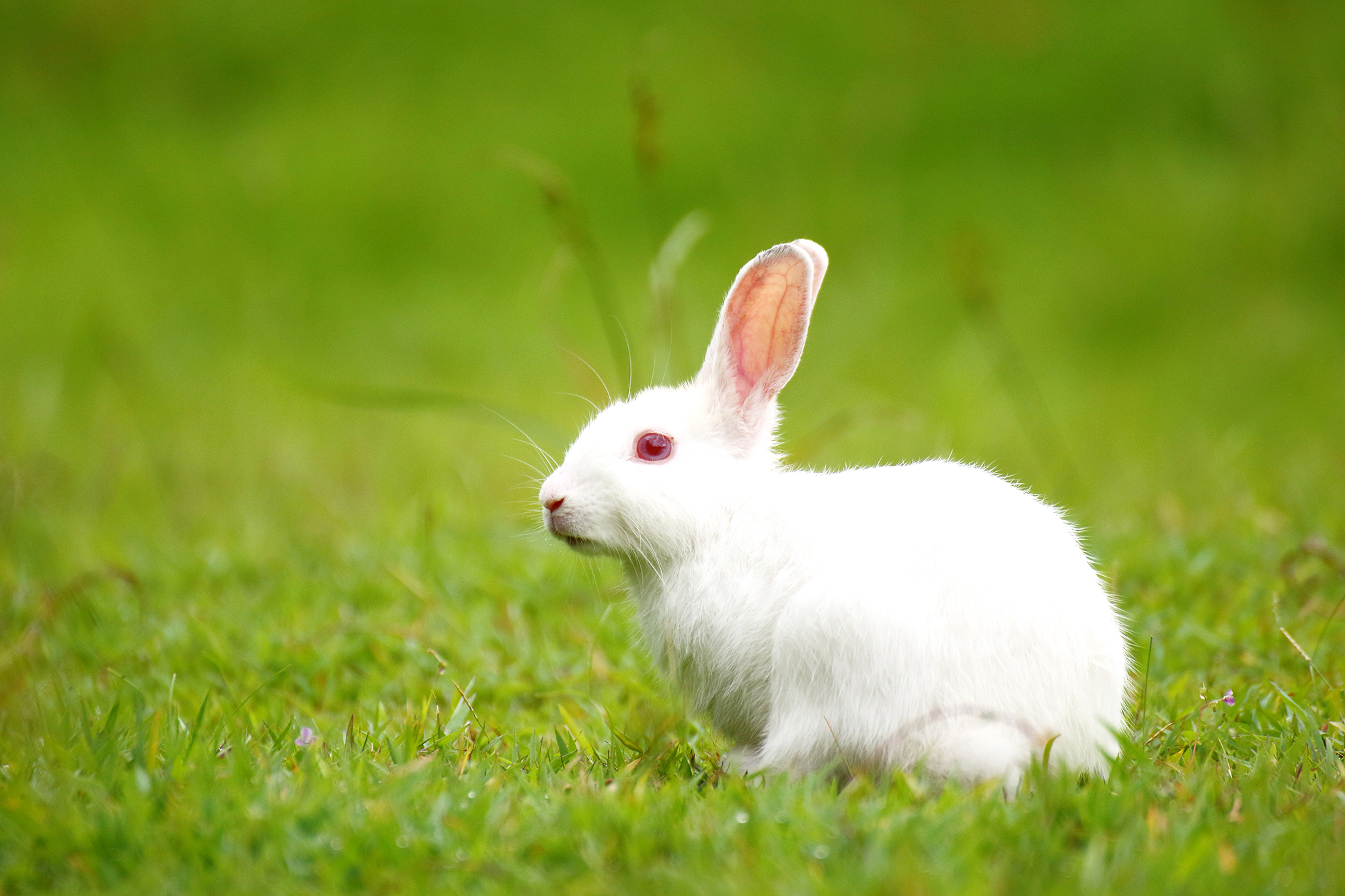 The Reason Why Rabbits Show Up In Horror Movies Like Us
