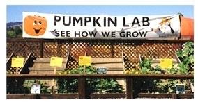 Uesugi Farms Pumpkin Park in Morgan Hill CA  Kid