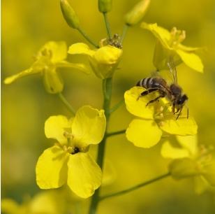 20 mai_Journée mondiale de l'abeille