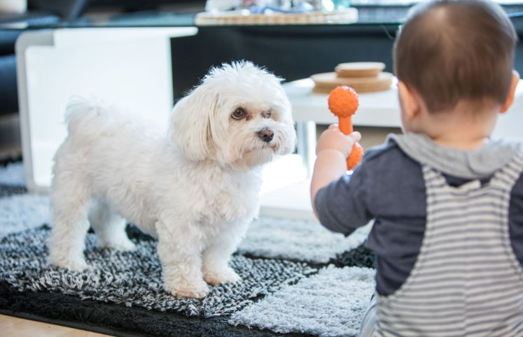 Allowing your child to keep a pet increases his exposure to more varieties of microorganisms, which helps prime his immune system. — dpa