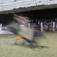 Weekly Photo Challenge: unfocused (3) Bull Flash