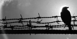 black and white image of bird sitting on barbed wire with the sun beaming from behind their head