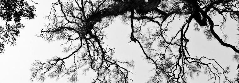 black and white image of tree branches with lots of little branches and sprouting off points