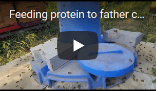 video feeding bees with proteine Apis Donau