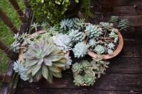 Lavish Green Potted Succulent Arrangement