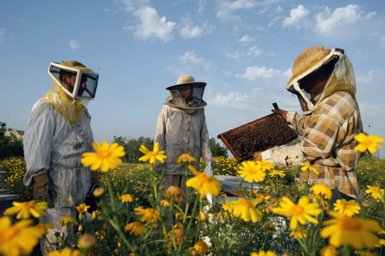 Gaza connait sa meilleure récolte de miel en une décennie