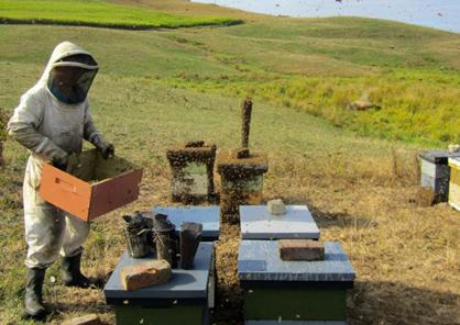 Yasuki Funahashi : apiculteur à Nagoya au Japon.