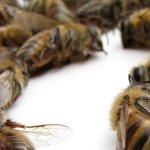 Un tiers des ruches seraient mortes au cours de l'hiver dernier