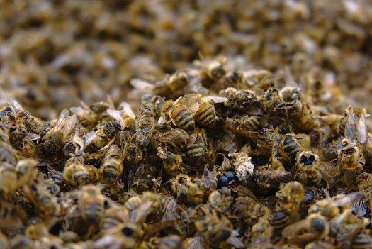Detectar Pesticidas 260218