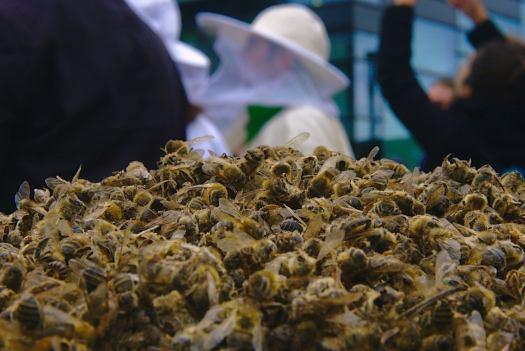 apicultura extremeña