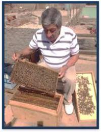 Trasladar abejas