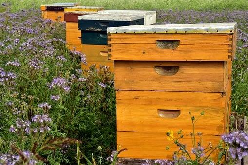 entrenamiento para apicultor
