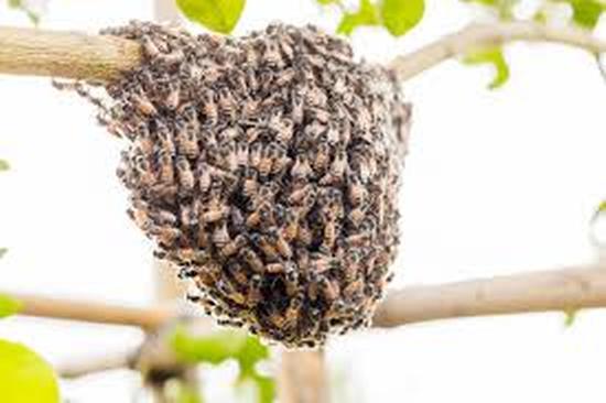 enjambres abejas ecosistema