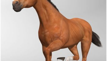Horse Riding 3D: Show Jumping Game Apk Download For Free in
