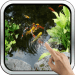 Magic Touch: Realistic Koi Live Wallpaper 7.0 APK