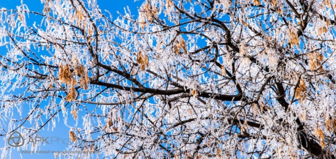 WM_winter_frost_Regina-8514