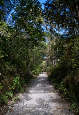 A walk through the forest to the Pelorus River, in the Marlborough region of New Zealand