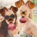 Download Face Live Camera: Photo Filters, Emojis, Stickers 1.3.3 APK For Android 2019