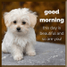 Download GOOD MORNING GIF STICKERS 1.1.4 APK For Android