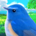 Download 鳥マスター! 3.0.1 APK For Android
