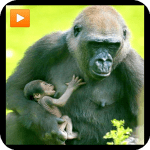 Download Mammals documentaries nature 4.0.0 APK For Android