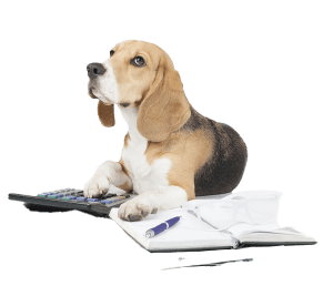 Benchmarking Beagle Veterinary Advisor