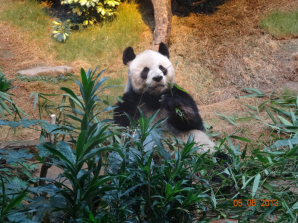 Dining - Panda~~~