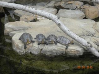 Old Turtles