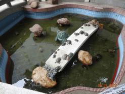 Turtles Pool