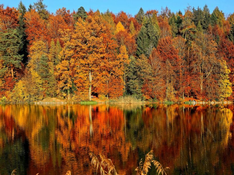 A beautiful autumn to all !
