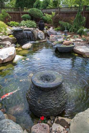 Ecosystem Pond_15