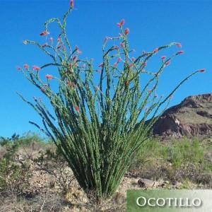 desert landscaping plants mesa