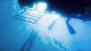 Spécialité plonger depuis un bateau