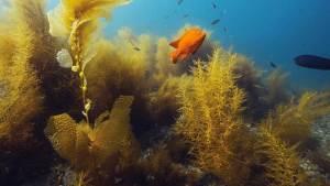 Underwater Naturalist Diver