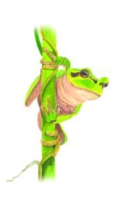 Entdecke dein Krafttier - Frosch