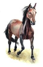 Entdecke dein Krafttier - Pferd