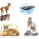 Krafttiere – Tiger, Wal, Wolf, Ziege
