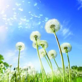 Führt eine Pollenallergie zu Juckreiz?