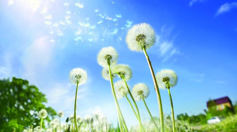 Führt-eine-Pollenallergie-zu-Juckreiz