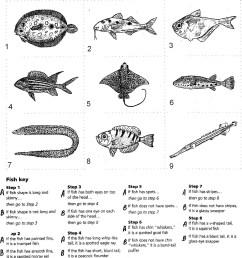 7 Animals Worksheets Classify - apocalomegaproductions.com [ 1721 x 1586 Pixel ]