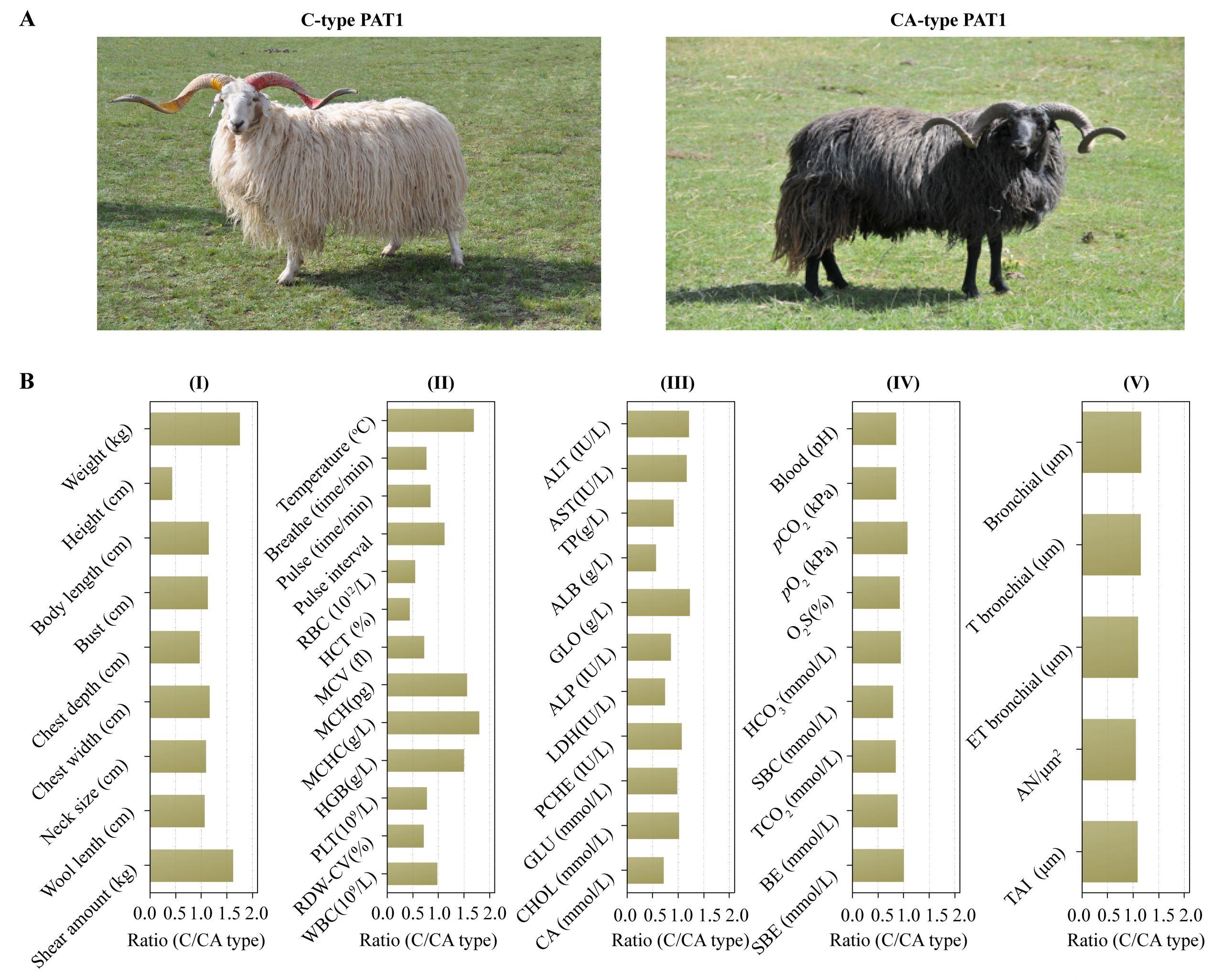 6 Farm Animals Preschool Goat